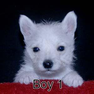 7-7-21 Jasmine Boy 1.JPG