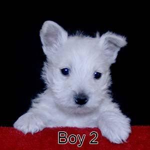 2-1-21 Sequin Boy 2.JPG