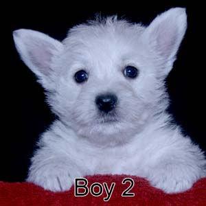 7-7-21 Luna Boy 2.JPG
