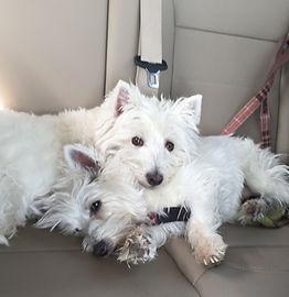 Daisy & Scooter