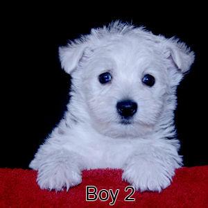 7-16-19 Melody Boy 2.jpg