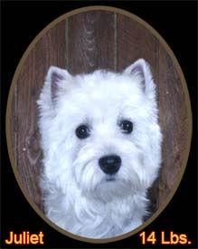 Juliet Portrait Web.jpg