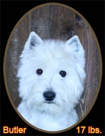 Butler Portrait Web.jpg