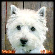 Walker Portrait Web.jpg