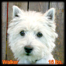 Walker Portrait Web.jpg