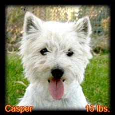 Casper Portrait Web.jpg