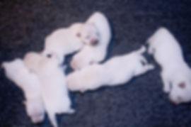 4-9-19 Noel Pups.JPG
