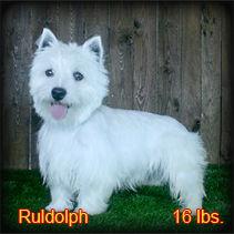Ruldolph Portrait Side Web.jpg
