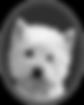 Westie Whispers Sydney
