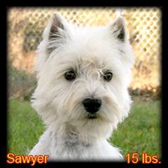 Sawyer Portrait Web.jpg