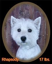 Rhapsody Portrait Web.jpg