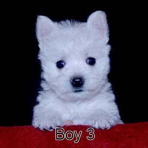 9-23-21 Tabitha Boy 3.JPG