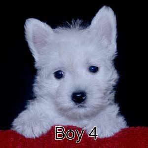 7-7-21 Luna Boy 4.JPG