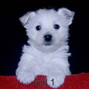 12-15-20 Noel Girl 1.JPG