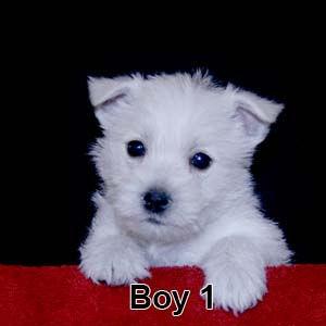 3-10-20 Leia Boy 1.JPG