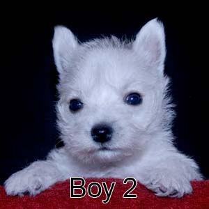 7-7-21 Jasmine Boy 2.JPG