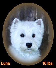 Luna Portrait Web.jpg