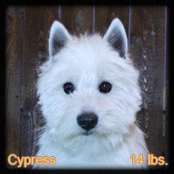 Cypress Portrait Face Web.jpg