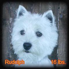 Rudolph Portrait Web.jpg