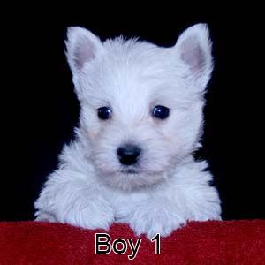 2-24-21 Tinsel Boy 1.JPG