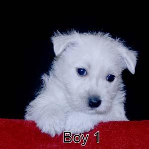 5-18-20 Holly Boy 1.JPG