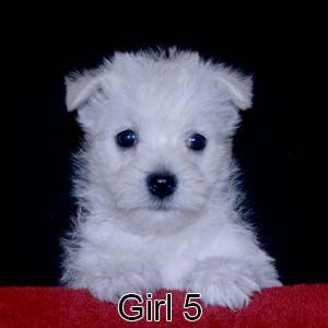 9-8-21 Tinsel Girl 5.JPG