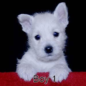 9-19-20 Tabitha Boy 1.JPG