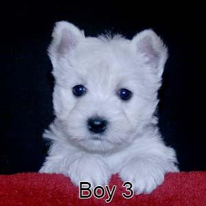 3-23-21 Tabitha Boy 3.JPG