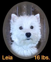Leia Portrait Web.jpg