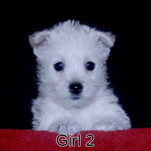 9-8-21 Tinsel Girl 2.JPG