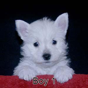 12-29-20 Chantilly Boy 1.JPG