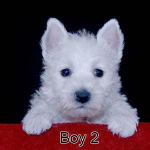 4-13-20 Cashmere Boy 2.JPG