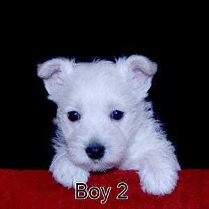7-21-20 Luna Boy 2.JPG