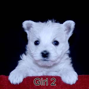 2-24-21 Ribbon Girl 2.JPG