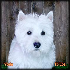 Yoda Portrait Web.jpg