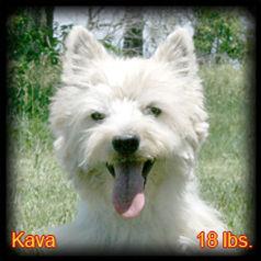 Kava Portrait Web.jpg