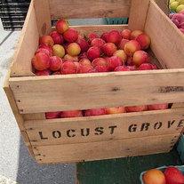 Farm Fresh Fruit | 2011
