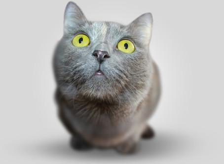 Vous avez trouvé un chat : que faire