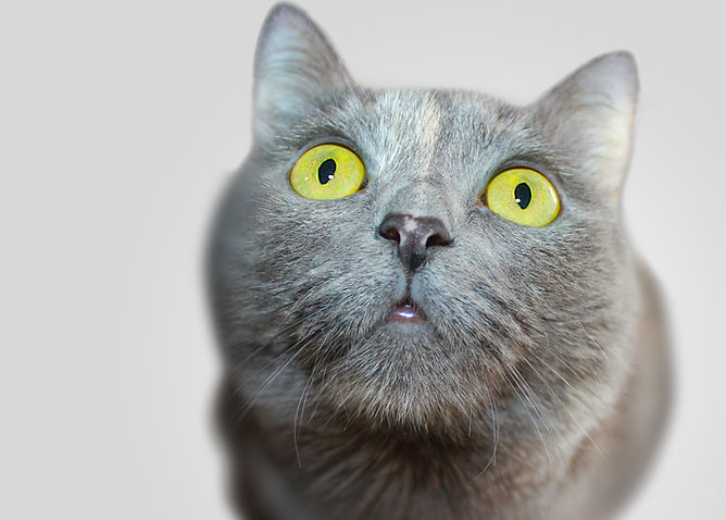 Serious Kitten