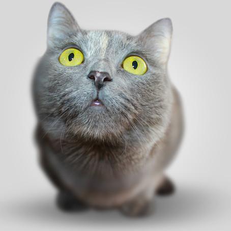 Katze nimmersatt - warum hat meine Katze immer Hunger?