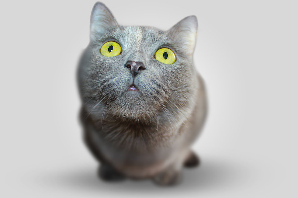 Kitten sério