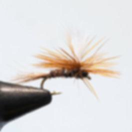Pheasant-Tail_Klinkhammer_web.jpg