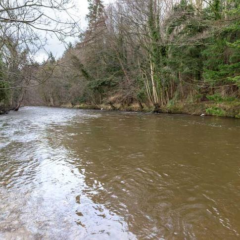Maes Elwy Wood Beat, River Elwy
