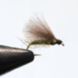 CDC_F-Fly_web.jpg