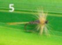 kites-imperial-LDO dun-FirstNature.jpg