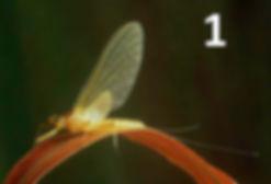 YellowMay - First Nature.jpg