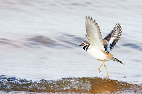 killdeer ready to launch