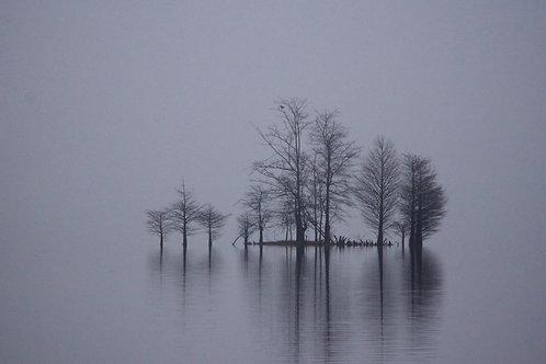 winter cypress island