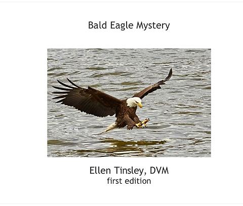 Bald Eagle Mystery