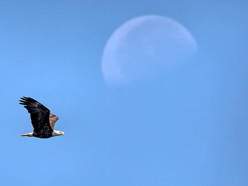 bald eagle and setting moon